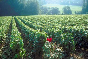 UMass Hosts Organic Farming Conference
