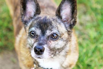 WHMP Dakin Humane Society Pet of the Week